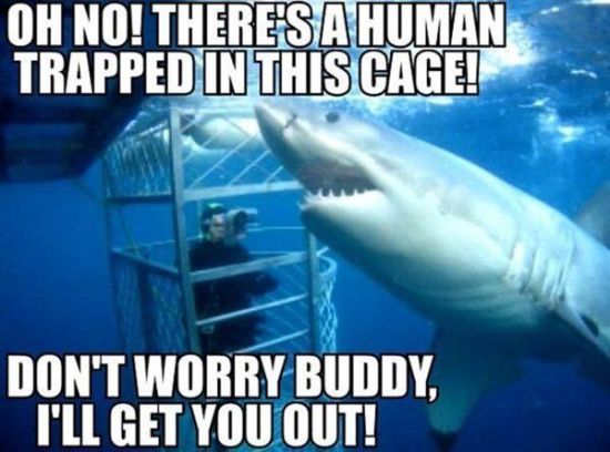 Image result for friendly shark meme